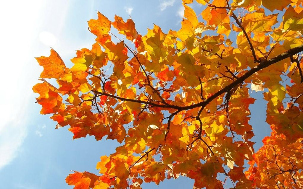 leaves_herbst_1024x640