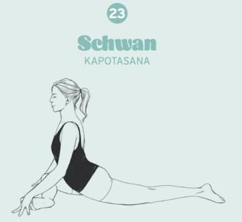 5_Schwan