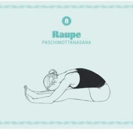 6_Raupe